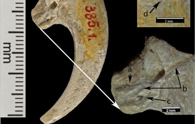 648x415 serres aigle retrouvees 1889
